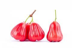 Pomme de Rose ou chomphu sur la nourriture saine de fruit de pomme rose de fond blanc d'isolement Images libres de droits
