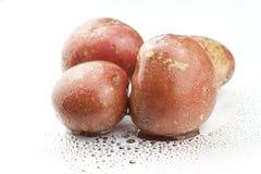 Pomme de terre Images libres de droits