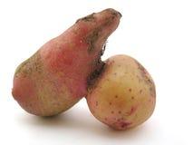 Pomme de terre photo libre de droits