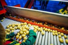 Pomme de terre assortissant, usine de traitement et d'emballage Images libres de droits