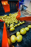 Pomme de terre assortissant, usine de traitement et d'emballage Photos stock