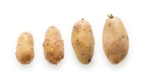 Pomme de terre dans la taille différente Photos libres de droits