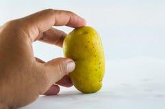 Pomme de terre de primeurs d'isolement sur la fin blanche de fond vers le haut Photo stock