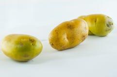 Pomme de terre de primeurs d'isolement sur la fin blanche de fond vers le haut Photos stock