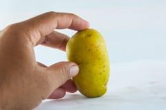 Pomme de terre de primeurs d'isolement sur la fin blanche de fond vers le haut Image stock