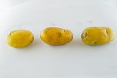 Pomme de terre de primeurs d'isolement sur la fin blanche de fond vers le haut Images stock