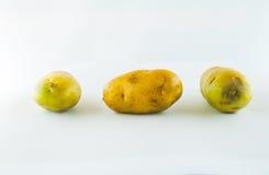 Pomme de terre de primeurs d'isolement sur la fin blanche de fond vers le haut Photos libres de droits