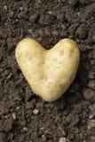 Pomme de terre en forme de coeur Photographie stock