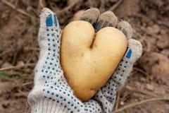 Pomme de terre en forme de coeur Image libre de droits