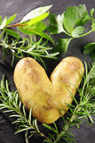 Amour de Potatoe Photographie stock libre de droits