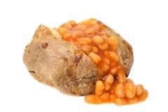 Pomme de terre en robe de chambre remplie de haricots cuits au four Photos libres de droits