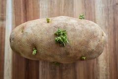 Pomme de terre simple sur la planche à découper Images stock