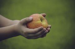 Pomme douce dans des mains Photo stock