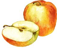 Pomme entière et demi dessin par l'aquarelle Photographie stock