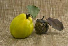 Pomme et coing putréfiés Photos libres de droits
