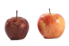 Pomme fraîche et putréfiée d'isolement sur le blanc Image stock