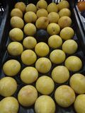 Pomme jaune Photographie stock