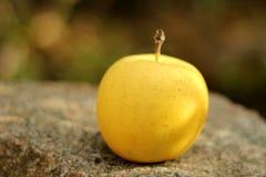 Pomme jaune Image libre de droits
