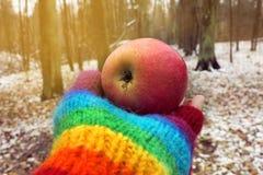 Pomme mûre rouge dans une main dans un gant d'arc-en-ciel Images stock