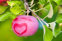 Pomme rouge avec un modèle de coeur Photographie stock