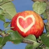 Pomme rouge dans l'arbre avec la forme découpée de coeur Photo libre de droits