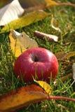 Pomme rouge dans l'herbe Photo libre de droits