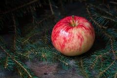 Pomme rouge et jaune sur les branches du sapin Photo stock