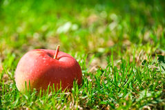 Pomme rouge saine Image stock