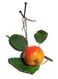 Pomme savoureuse Photographie stock