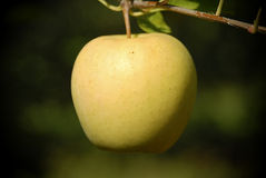 Pomme simple Photos libres de droits