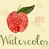Pomme tirée par la main d'aquarelle de style nature Illustration Libre de Droits