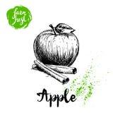 Pomme tirée par la main de croquis avec l'affiche de bâtons de feuille et de cannelle Vitamine et illustration saine de vecteur d illustration de vecteur