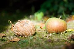 Pommes. Photo stock