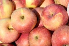 Pommes Photo stock
