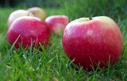 Pommes photos libres de droits