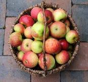 Pommes Image libre de droits