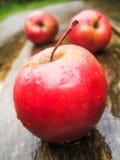 Pommes après pluie Photo stock