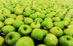 Pommes assortissant et emballant Photographie stock