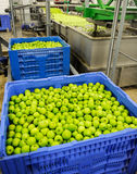 Pommes assortissant et emballant Image stock
