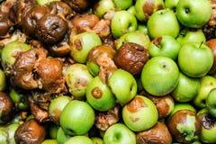 Pommes assortissant et emballant Images stock