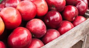 Pommes au marché d'agriculteurs Image libre de droits