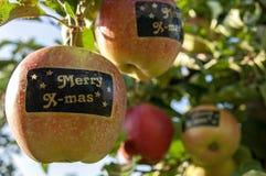 Pommes avec des autocollants avec la joyeuse X-masse des textes dans l'arbre Photos stock