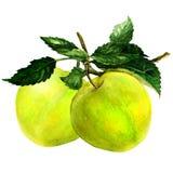 Pommes avec des feuilles illustration libre de droits