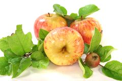 Pommes avec des lames Photo stock