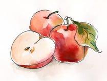 Pommes d'aquarelle Photos libres de droits