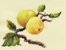 Pommes d'aquarelle peignant sur l'illustration de vecteur d'arbre Photographie stock