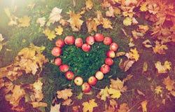 Pommes dans des feuilles de forme et d'automne de coeur sur l'herbe Photo libre de droits