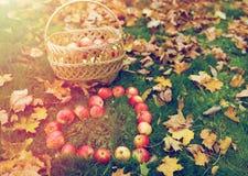 Pommes dans des feuilles de forme et d'automne de coeur sur l'herbe Photos stock