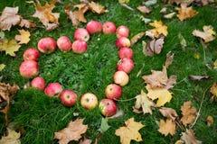 Pommes dans des feuilles de forme et d'automne de coeur sur l'herbe Photographie stock