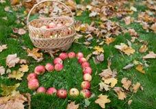 Pommes dans des feuilles de forme et d'automne de coeur sur l'herbe Image libre de droits